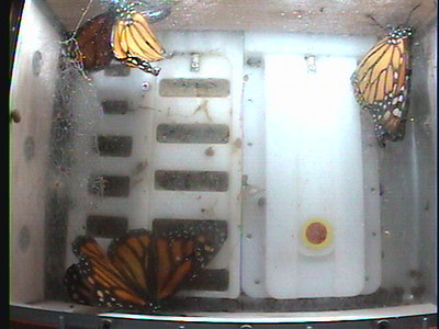 Monarch1-Flt_Whole 2009-12-07_05-29-35