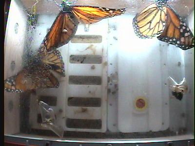 Monarch1-Flt_Whole 2009-12-07_01-11-47