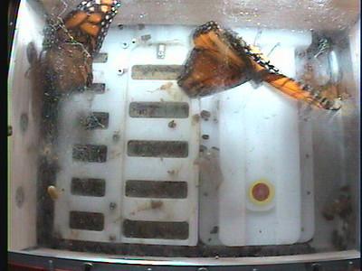 Monarch1-Flt_Whole 2009-12-06_02-13-12
