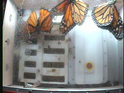Monarch1-Flt_Whole 2009-12-07_01-53-01