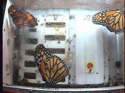 Monarch1-Flt_Whole 2009-12-05_05-59-13