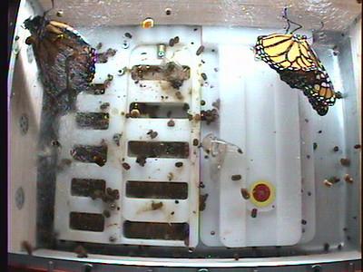 Monarch1-Flt_Whole 2009-12-04_06-30-56