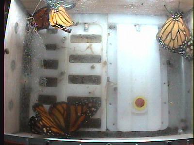 Monarch1-Flt_Whole 2009-12-07_05-19-17
