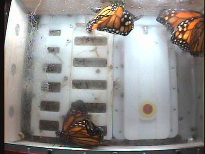 Monarch1-Flt_Whole 2009-12-07_03-15-33