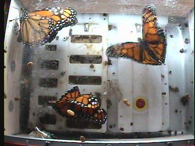 Monarch1-Flt_Whole 2009-12-05_01-52-00