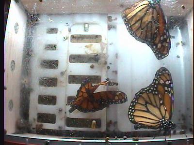 Monarch1-Flt_Whole 2009-12-05_21-55-33