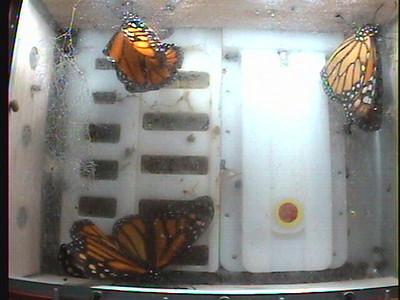 Monarch1-Flt_Whole 2009-12-07_06-41-43