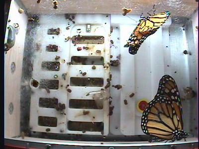 Monarch1-Flt_Whole 2009-12-04_04-48-04
