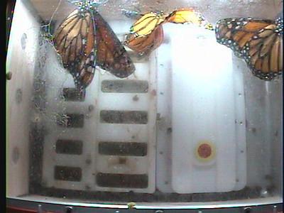 Monarch1-Flt_Whole 2009-12-07_19-41-30