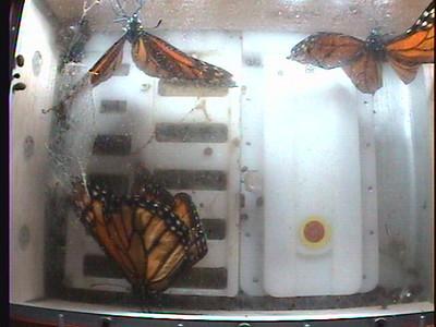 Monarch1-Flt_Whole 2009-12-08_01-42-40