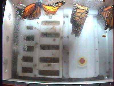 Monarch1-Flt_Whole 2009-12-07_02-54-56