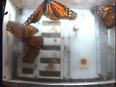 Monarch1-Flt_Whole 2009-12-07_02-24-01
