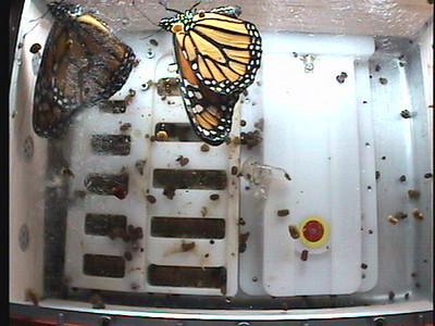Monarch1-Flt_Whole 2009-12-04_06-20-39