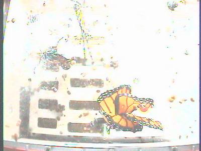 Monarch1-Flt_Whole 2009-12-04_19-00-13