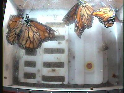 Monarch1-Flt_Whole 2009-12-08_03-05-10