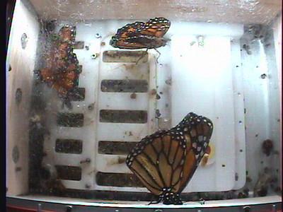 Monarch1-Flt_Whole 2009-12-05_06-50-48