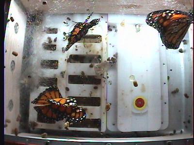 Monarch1-Flt_Whole 2009-12-04_22-15-48