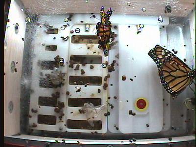 Monarch1-Flt_Whole 2009-12-03_22-36-55