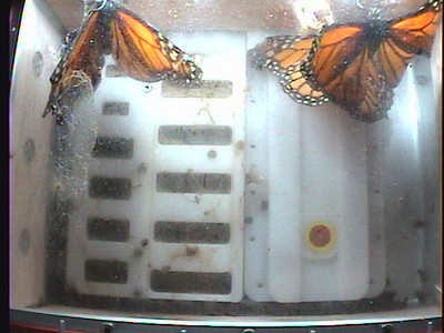 Monarch1-Flt_Whole 2009-12-08_03-56-38