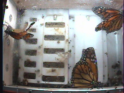 Monarch1-Flt_Whole 2009-12-05_20-12-26