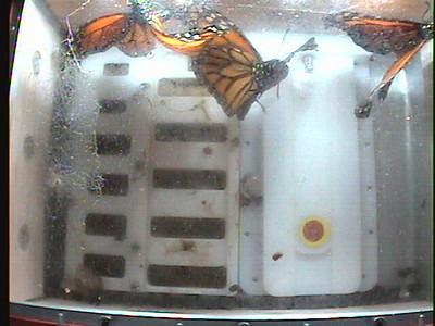 Monarch1-Flt_Whole 2009-12-07_21-45-37