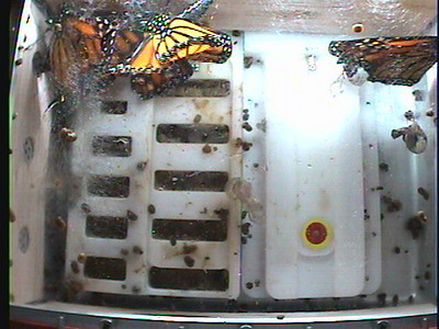 Monarch1-Flt_Whole 2009-12-05_01-00-35
