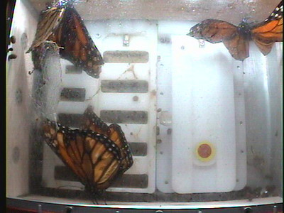 Monarch1-Flt_Whole 2009-12-08_01-32-21