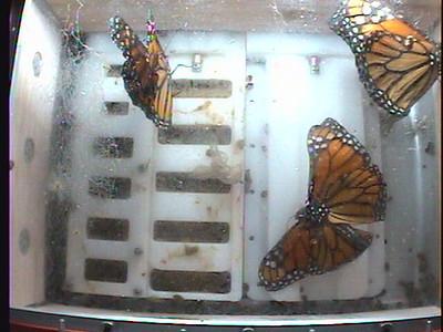 Monarch1-Flt_Whole 2009-12-06_06-20-35