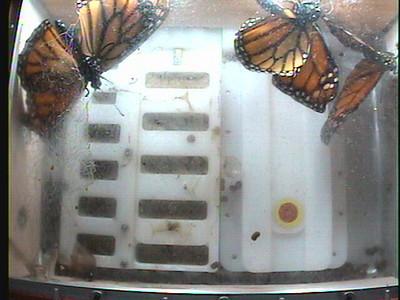 Monarch1-Flt_Whole 2009-12-07_22-26-50
