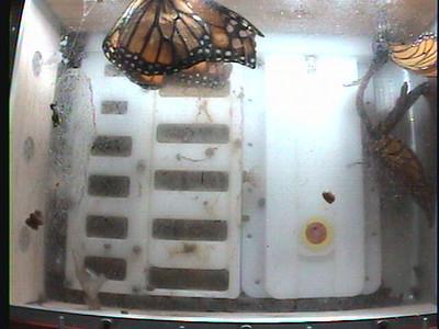 Monarch1-Flt_Whole 2009-12-08_03-15-28
