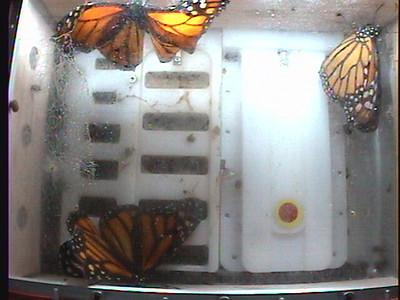 Monarch1-Flt_Whole 2009-12-07_06-10-50