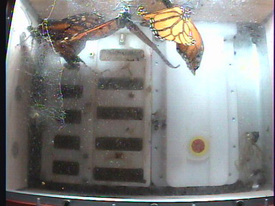 Monarch1-Flt_Whole 2009-12-07_20-54-07