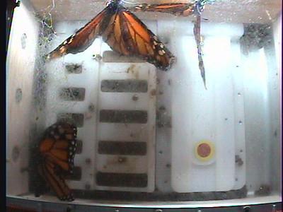 Monarch1-Flt_Whole 2009-12-06_23-59-39