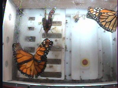 Monarch1-Flt_Whole 2009-12-06_05-59-59