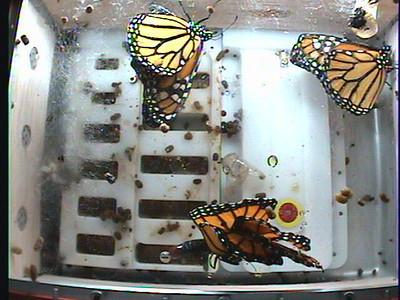 Monarch1-Flt_Whole 2009-12-04_19-41-22