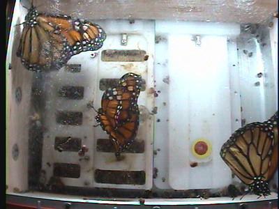 Monarch1-Flt_Whole 2009-12-05_04-36-49