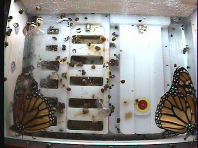 Monarch1-Flt_Whole 2009-12-04_02-34-11