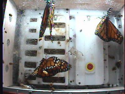 Monarch1-Flt_Whole 2009-12-05_02-12-35