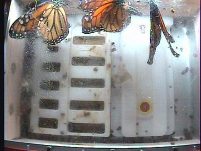 Monarch1-Flt_Whole 2009-12-06_03-15-00