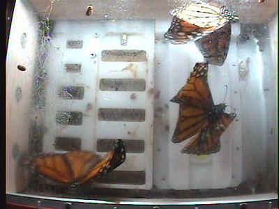 Monarch1-Flt_Whole 2009-12-07_01-42-44