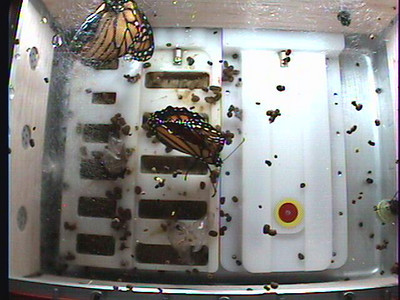Monarch1-Flt_Whole 2009-12-03_21-03-55