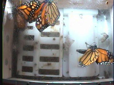 Monarch1-Flt_Whole 2009-12-06_03-04-42