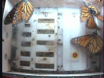 Monarch1-Flt_Whole 2009-12-06_02-23-30