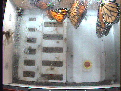 Monarch1-Flt_Whole 2009-12-07_04-17-27