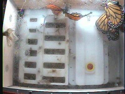 Monarch1-Flt_Whole 2009-12-07_04-48-22