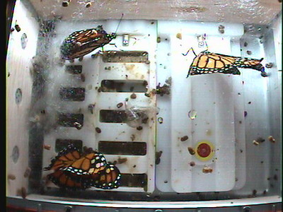 Monarch1-Flt_Whole 2009-12-04_20-12-15