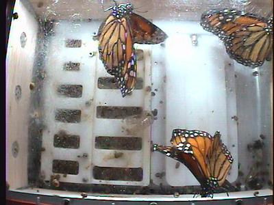 Monarch1-Flt_Whole 2009-12-05_20-43-22