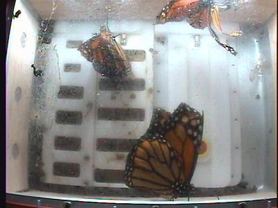 Monarch1-Flt_Whole 2009-12-08_05-08-49