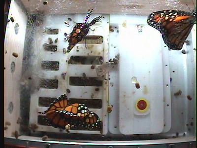 Monarch1-Flt_Whole 2009-12-04_21-55-07