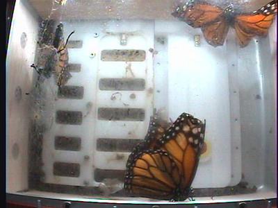 Monarch1-Flt_Whole 2009-12-08_06-10-40